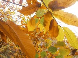 chateigner: balade sur les arbres et les arbustes