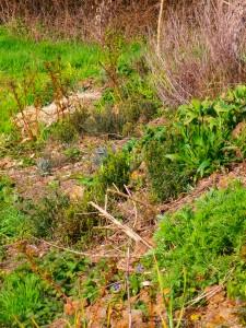 les plantes sauavages et médicinalesau jardin