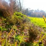 aromatiques du sud mêlées aux plantes sauvages spontanées