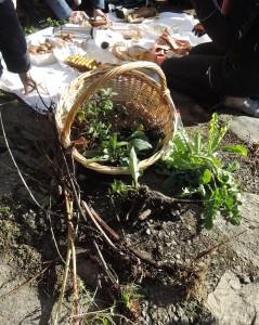 les plantes sauvages et leurs racinescomestibles et médicinales