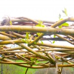 structure en saule osier