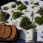 atelier-cuisine-plantes-sauvages