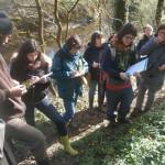 balades de reconnaissance des plantes sauvages