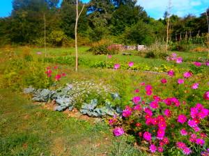Le jardin de légéumes et de plantes sauvages de la Motte