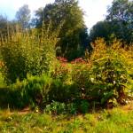 La motte jardin de PAM