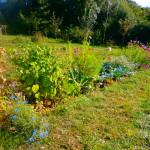 association plantes et jardin
