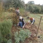 atelier les plantes au jardin