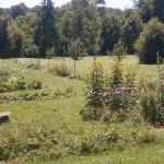 jardin nourricier et fleuri 2017