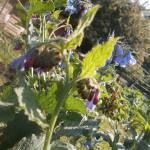 jardin et plantes sauvages