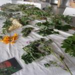 cauderie plantes sauvages