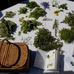 atelier cuisine plantes sauvages