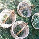 paniers de recolte de plantes sauvages