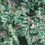 plantes adaptogènes face au stress