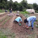 jardin de légumes de plantes et productif et autonome
